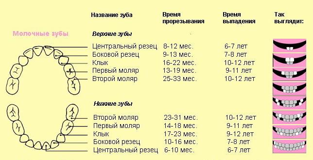 на зубы сколько дней температура защита